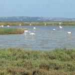 L'étang entre Bages et Peyriac de Mer