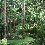 Gully garden