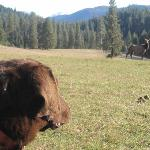 Gilmore Ranch watching elk