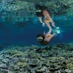 Incredible snorkelling