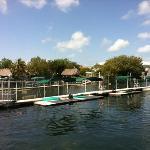 Becken Dolphins Plus