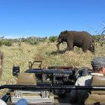 Bayete Game Drive