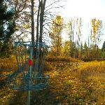 Disc golf course on our property