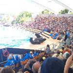 orcas are amazing