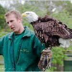 Bald Eagle demonstration