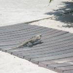 animaux hotel iguane