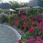 Part of the hotel beautiful garden