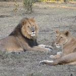 Simba's - male and female relaxing