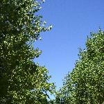 le ciel vu du camping