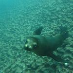 Viele sehr lange Begegnungen mit sehr verspielten Seelöwen