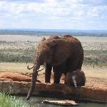 Mother and Baby at VOI water hole