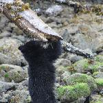 Wonderful bear watching with AdventureTofino.
