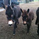 The Donkey Sanctuary