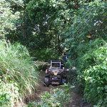 Through the bush