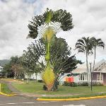 einzigartige palmen