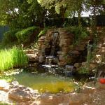 Our water feature is tranquil and relaxing