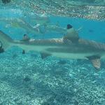 Escursione con gli squali