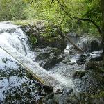 Afon Vyrnwy