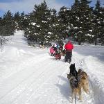 Ballade en traineau à chiens l'hiver