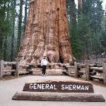 generalle sherman