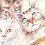 I nostri tre bellissimi mici