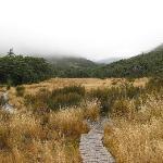 Walkway through Tussock Grass