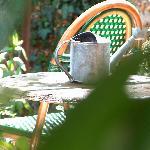 aux beaux jours, dans le jardin