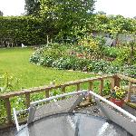 back garden - bird heaven