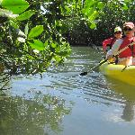 Going into the mangroves.