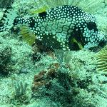 Pelnty of reef fish
