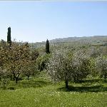 Vista olivi