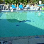 Foto de Dolphin Inn