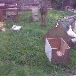 view from breakfast, ducks...