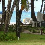 les palmiers géants