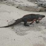 Iguana Island...AWESOME!