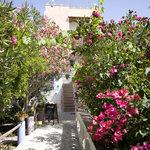 viale del giardino mediterraneo