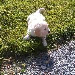 Rosie, the cutest puppy in the world.