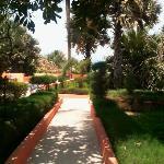 Garden view towards pool area