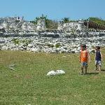 The iguanas are everywhere!