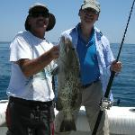 Gray grouper