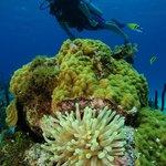 San Andres subaquatico... Blue Life