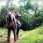 elephant ride 15min walking distance from hotel