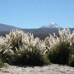 Vista Atacama