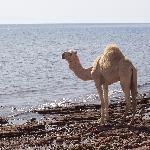 sea sun camel