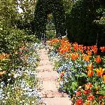 なかなかきれいな花の小道
