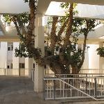 Ya'akov garden, behind Mann auditorium