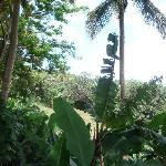 Rain forest Side View