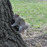 Ecureuil dans Central Park