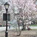 Malgré un printemps très tardif, on a pu trouvé un arbre fleuri...
