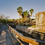 boardwalk near chimpanzees